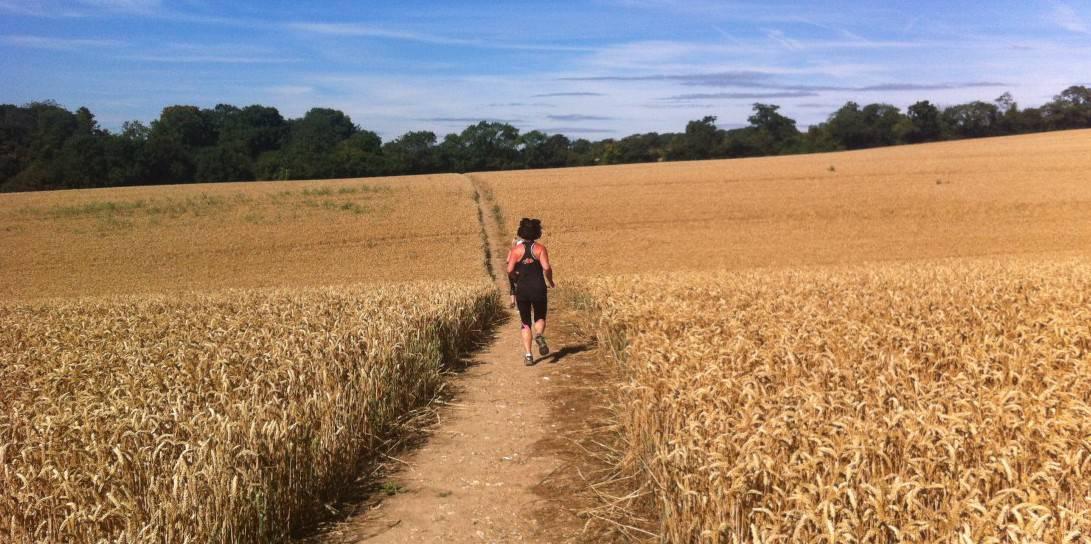 cornfield run